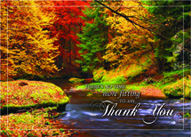 Splashes Of Color Thanksgiving Cards